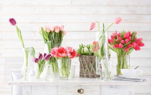 tulipan11