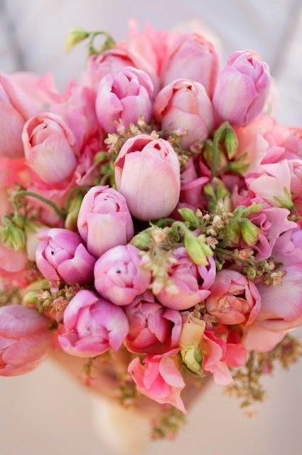 tulipanes6
