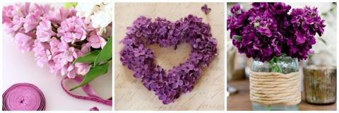 purpura4